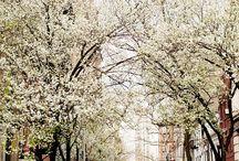 • Spring •