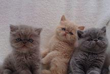 Cute / Cutie