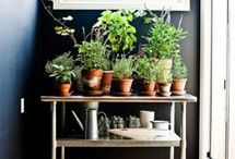 Gardening indoors / by Brooke Graham