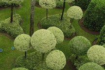 GARDEN : Hedge