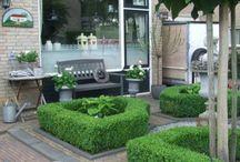 voortuin / Veel groen, bolvormige bomen, witte hortensia's