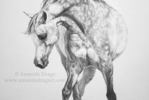 Horse draw *-*