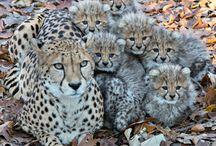 Cuty dieren