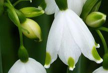 Saksılık çiçekler