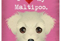 maltipoo / by Jessica Franco