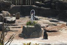 Grape-Kun - Otaku Penguin / Grape-kun was a otaku penguin living at the Tobu Zoo in Saitama Prefecture.