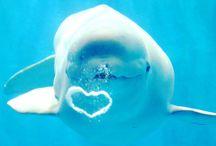 ADORABLE!!!!! / Belugas mainly