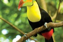 Tucans y otras aves