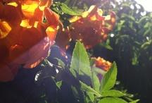 My Grandmas Garden / by Susie Chavez