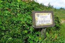 Madeira - eine Wanderwoche um die Blumeninsel / Der trockene Osten, der kühle Norden, die kargen Berge, die feuchte Hochebene und der sonnenreiche Süden laden Sie zur Entdeckung dieser wunderbaren Insel.