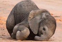 Elephants / Love forever ❤
