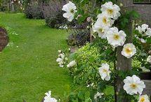 Garden. 2