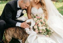 Animals & Pets in Weddings / Animals in Weddings, Pets in Weddings, Dogs in Weddings, Cats in Weddings, Horses in Weddings, Bunnies in Weddings, Puppies in Weddings, Pet Photography, Animal Photography, Dog Ring Bearer, Pet Ring Bearer, Animal Wedding Photography, Pet Wedding Photography, Dogs Wearing Bow Ties, Pets Wearing Tuxedos, Dogs in Tuxedos, Ways to Incorporate Pets in Weddings, How to Have Animals in Weddings