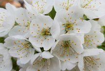 Ini Ragam Bunga (flowers)