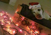 Karácsonyi (Ünnepi) Beagle Fotópályázat 2015 / Karácsonyi (Ünnepi) Beagle Fotópályázat 2015  #bchufotopalyazat2015 #beagle #kutya #beagleclub   Karácsonyi (Ünnepi) Beagle Fotópályázat: http://bit.ly/beaglekaracsonyiunnepibeaglefotopalyazat  KÉPEK: http://bit.ly/beagleclubhu-fp-kepek