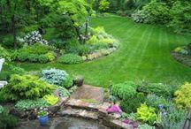 Gardening / by Amy Wilson