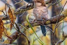 ...it's a birds life...