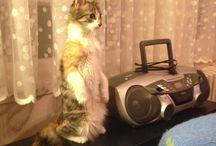 Cat / Stand