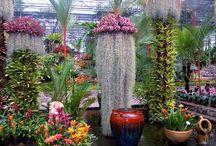 botanické zahrady, arboreta, parky, květinové farmy