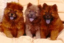 kids with fur