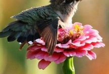 Birds : hummingbirds