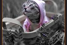 Pretty kitty / by Becky Doland