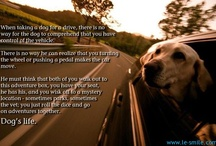 dogs / by CommentLuv