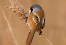Favourite birds