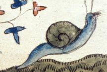 Średniowieczne ślimaki / Medieval snails