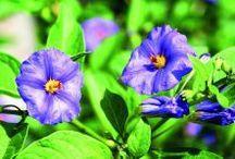 plano para semear verduras e flores todo ano