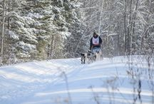 UP200 Dog Sled Race / Annual 240-mile race held in Michigan's Upper Peninsula.