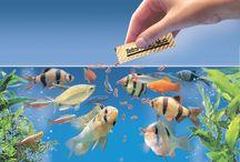Fishkeeping & aquascaping