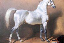 Horses / by Melissa Strobel