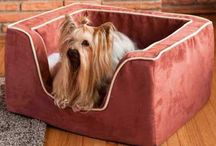 * Pampered Pets * / Pampering Everyone In The Family With Comfort And Love / by Marlene Sanchez