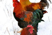 farm animals / by Mary Bramos