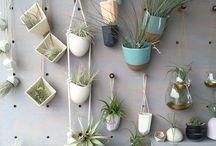 Plantas macetas