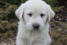 { Puppies }
