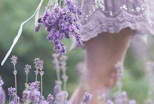 colours:Violet
