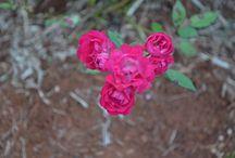 Plantas / Fotos de flores e plantas