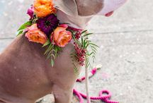 pooches and petals