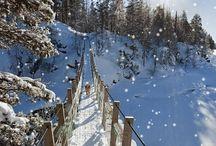 Snow /Winter