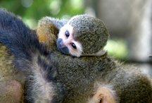 Babies! / Cute and cuddly little creatures at the GVZoo / by Greater Vancouver Zoo