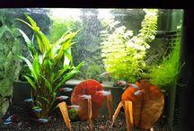 Aquarium / Zoetwater Aquarium