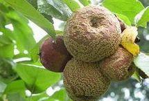 болезни плодово ягодных