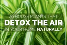 Detox Your Home / Buyers have new concerns about greener and cleaner homes. www.academyrealty.com