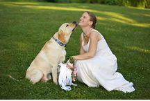 Cães no casamento {CASAMENTOS&CASAS}
