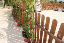 Plantas de exterior / Nuestra variedad de plantas de exterior para jardín y terraza.