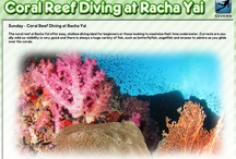 Scuba Diving Day Trips - Phuket / Scuba diving day trips