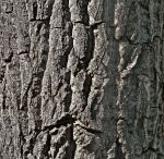 Trees and Treebark