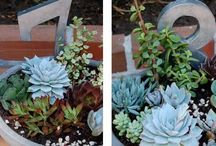 succulents / by Angie Taormina